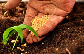 Que semer et planter en mars astuces pour pr parer correctement sa saison de jardinage blog - Que semer en octobre ...