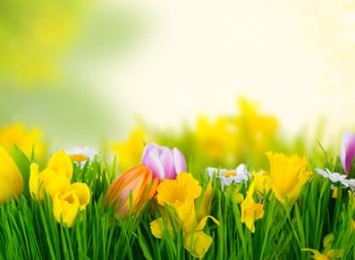 Plantes et potager, les travaux à mener en avril