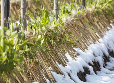 Le jardinage en février, quelles étapes à franchir ?