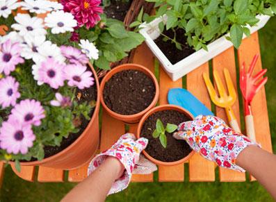 Juin au jardin, tous les espoirs sont permis !