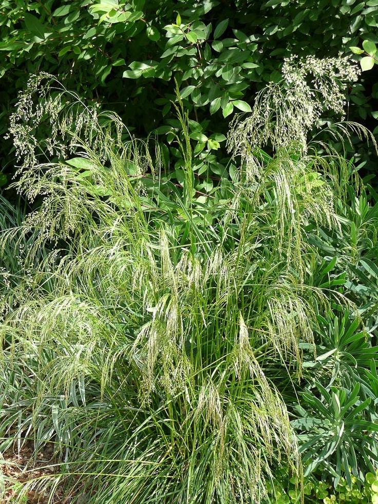 Juin au jardin tous les espoirs sont permis blog - Comment se debarrasser du liseron au jardin ...