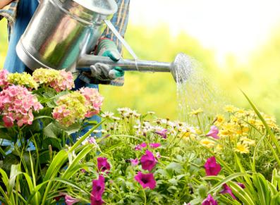 Jardin en août, les conseils des vacanciers !