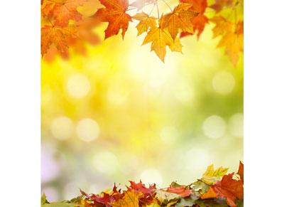 Octobre, nouvelles couleurs et nouveaux devoirs pour tout bon jardinier