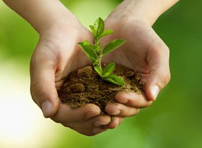 L'engrais, le « coup de fouet » qui manquait à vos plantes