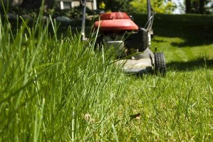 Mon beau gazon roi des jardins blog conseil abri for Tondre le gazon