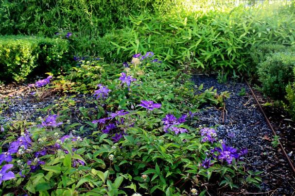 Les plantes couvre sol secret de jardinier malin - Couvre sol persistant ...