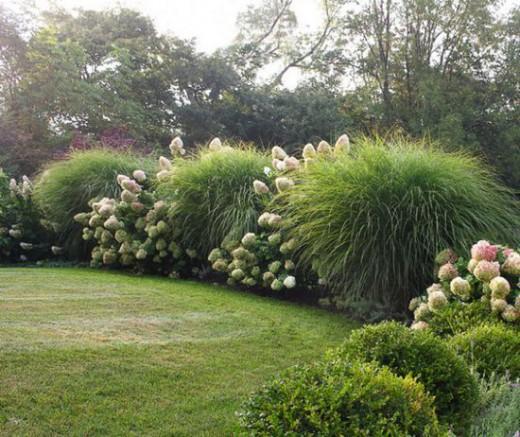Landscaping With Evergreens And Grasses : Une haie libre m?lange subtile de massifs et d arbustes touffus