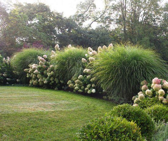 Tailler ses haies un geste d entretien ne pas n gliger blog conseil abri jardin garage - Arbuste contemporain ...