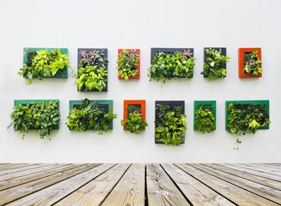 mur végétal élégant et chic avec des cadres colorés