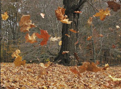 Ah, les feuilles mortes qui tombent, qui tombent… crédit photo : Pinterest/J M Lysun/Wordpress)