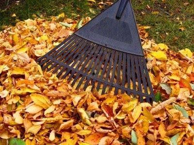 les feuilles mortes : la plaie du jardin à ratisser au balais à gazon