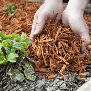 Le paillis pour protéger ses plantes au jardin