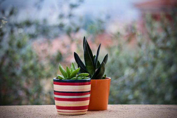 Des pots de fleurs connectés pour le jardin du futur