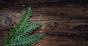 comprendre le bois thermo traité