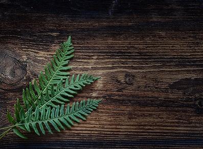Le bois thermo-traité pour un abri de jardin à longue durée de vie… et écologique !