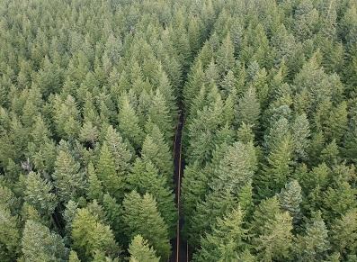 Pourquoi du bois Douglas pour son abri de jardin?