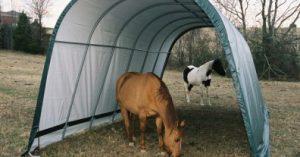 abri chevaux pas cher