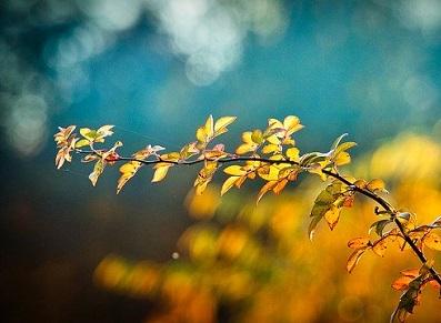 abri jardin installé à l'automne