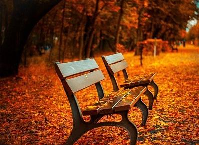 cabanon rangement à l'automne