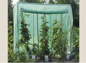 SERRE A TOMATES LARGE france abris